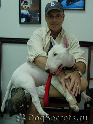 Мастопатия у собаки чем лечить в домашних