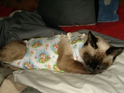 Акана корм для кошек и собак в Красноярске