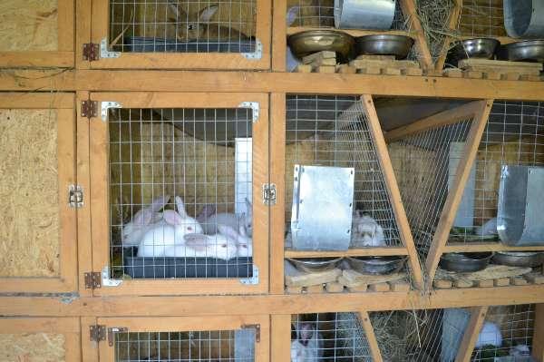 Простая клетка для кролика своими руками