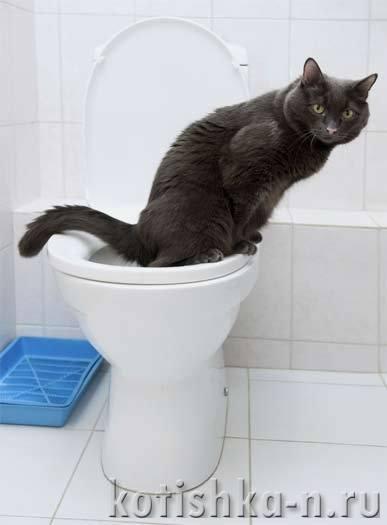 Как сделать чтобы кошка ходила за мной Taksadog.ru